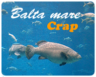 balta-mare.png